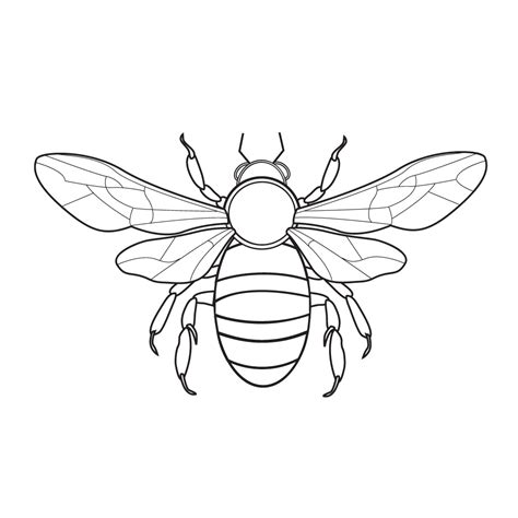Bee Coloring Pages | 360ColoringPages