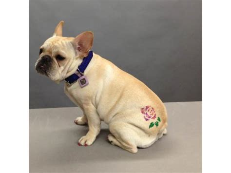 Dog Owners Dress Up Their Posh Pooches With 'Tattoos